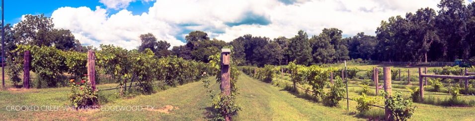 CrookedCreekVineyards 2014-5